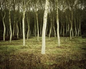 048_Landscape_MichaelSchnabel