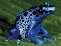 šumeći žaba aspirin C