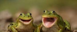 žabe borzanovići